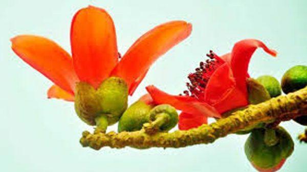 আজ পহেলা ফাল্গুন, নতুন রূপে প্রকৃতি
